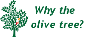 why-olive-tree